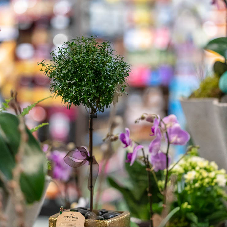Stongs_Careers-Gallery-Images_Floral11