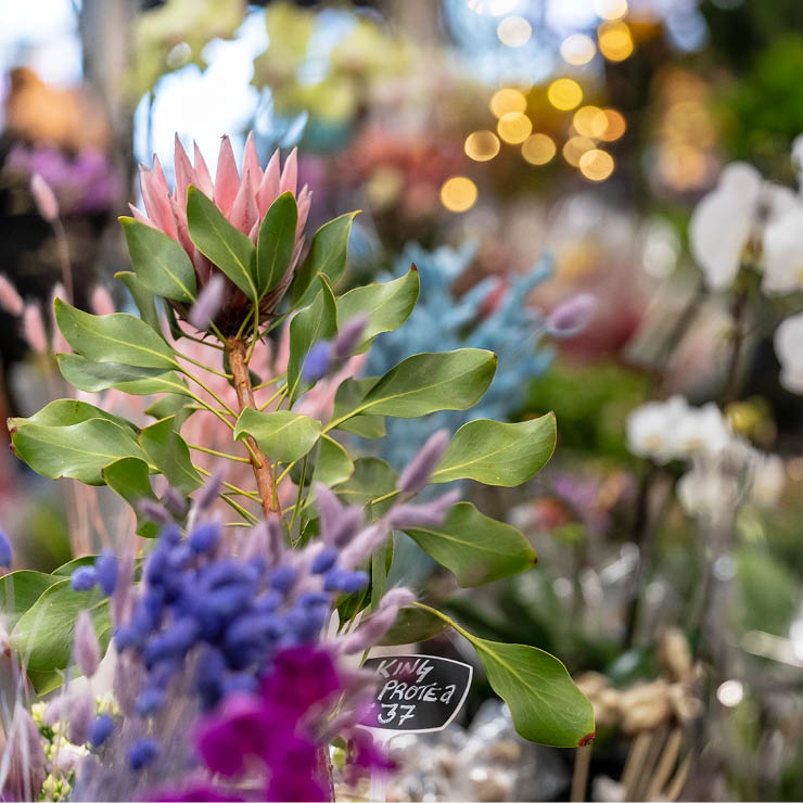 Stongs_Careers-Gallery-Images_Floral2